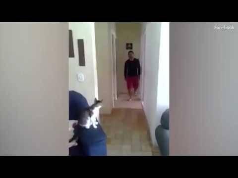 kat kan trucje