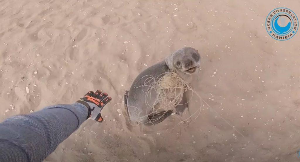 zeehond redden
