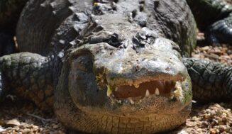 De 12 dodelijkste dieren op aarde
